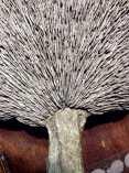 'Organic' Collection: Mushroom lamp top finish in process