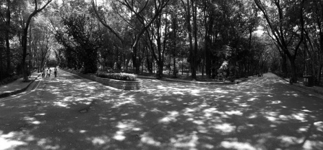 "The Landscape of the IIM Bangalore Campus: ""Ramaswamy's Forest"""